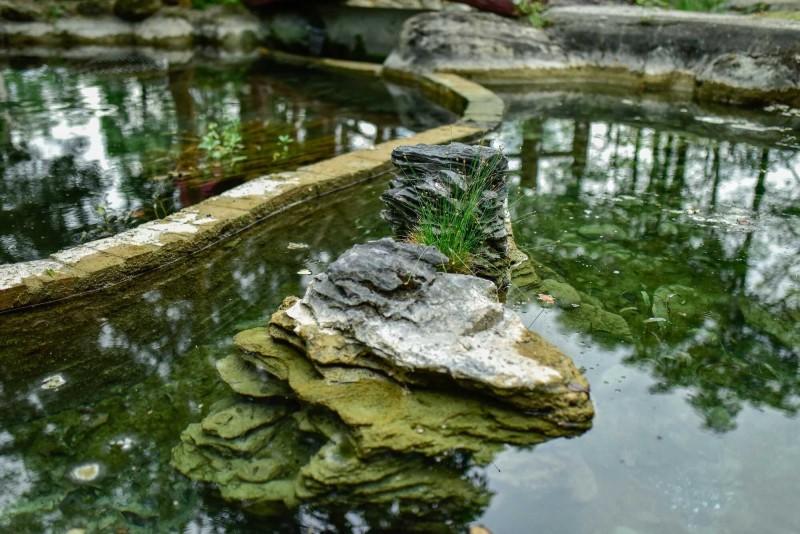 花蓮縣「怡園生態小學塾」內設置生態池,仿造花蓮溪流生態,內有台灣特有種的水生動植物。(花蓮縣環保局提供)