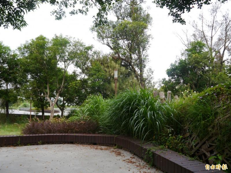 台灣燈會主展區 花博閉幕半年雜草叢生、回歸森林樣貌