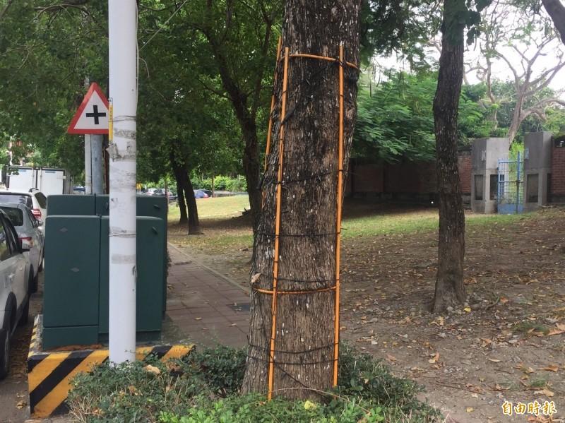 路樹何辜!鐵條嵌樹幹 2年多未鬆綁