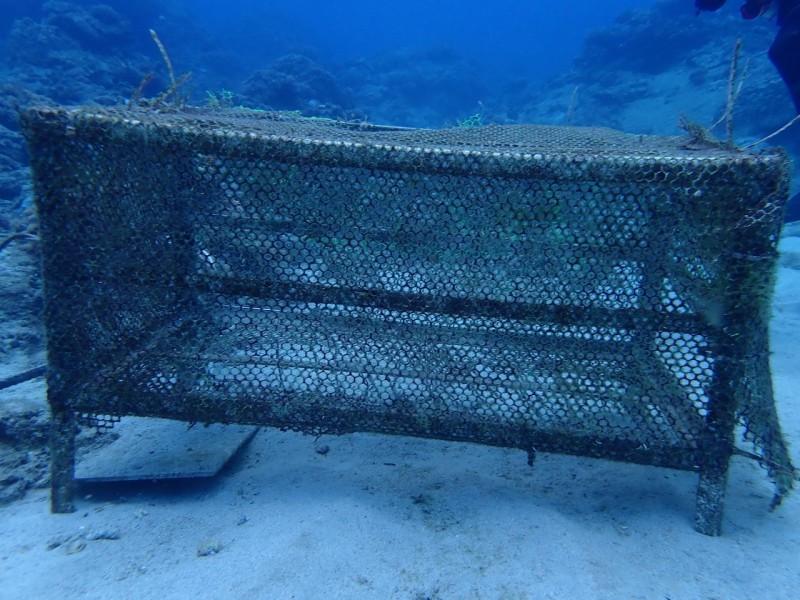 綠島石朗保護區海底養育硨磲貝?貝只剩空籠,50顆被盜一空。(記者黃明堂翻攝)