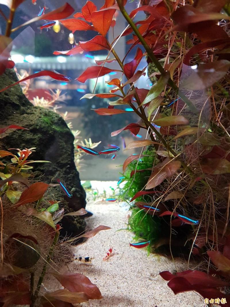桃園農博人氣很夯的漁業館「魚の新世界」。(記者李容萍攝)