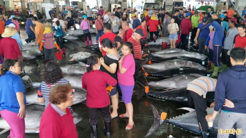 黑鮪交換大目鮪配額損失4億? 漁民超專業打臉藍委