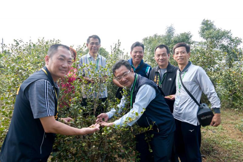 湖口推廣高經濟作物油茶 採收量倍數成長