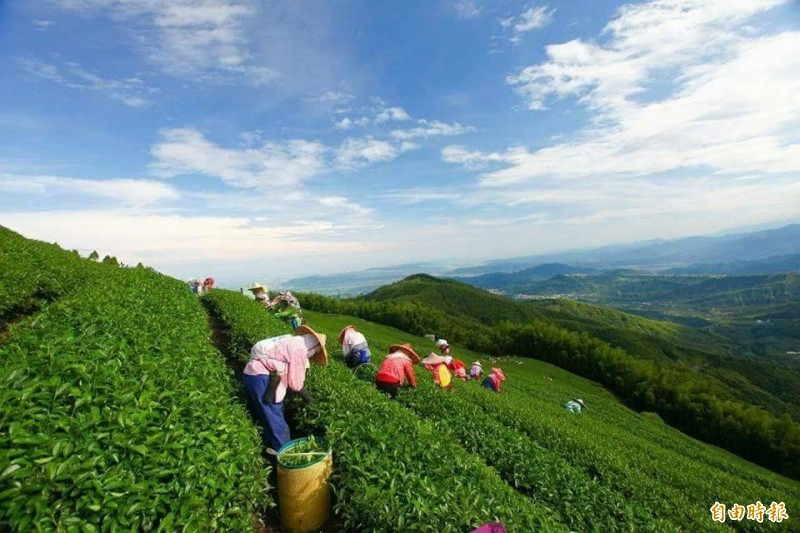 防範山寨版再進階!鹿谷農會今冬茶賽更換「評審用水」