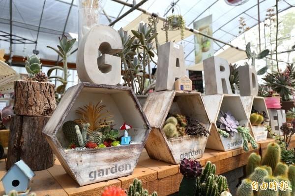 多肉植物好療癒 今年展售會19、20兩日彰化田尾登場