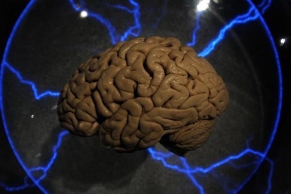 用腦太多會折壽?哈佛醫學院研究:大腦越活躍壽命可能越短