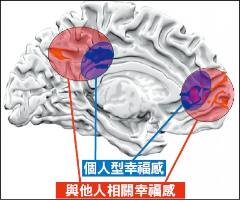 成大心理系副教授龔俊嘉團隊發現,個人型幸福感的影像核心區比較亮,與他人相關幸福感範圍較大。(成大提供)