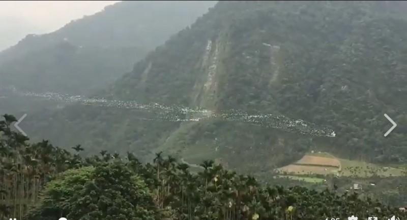 「萬鷺朝鳳」拍攝地點在台灣嘉義太興村。(曾錦富提供)