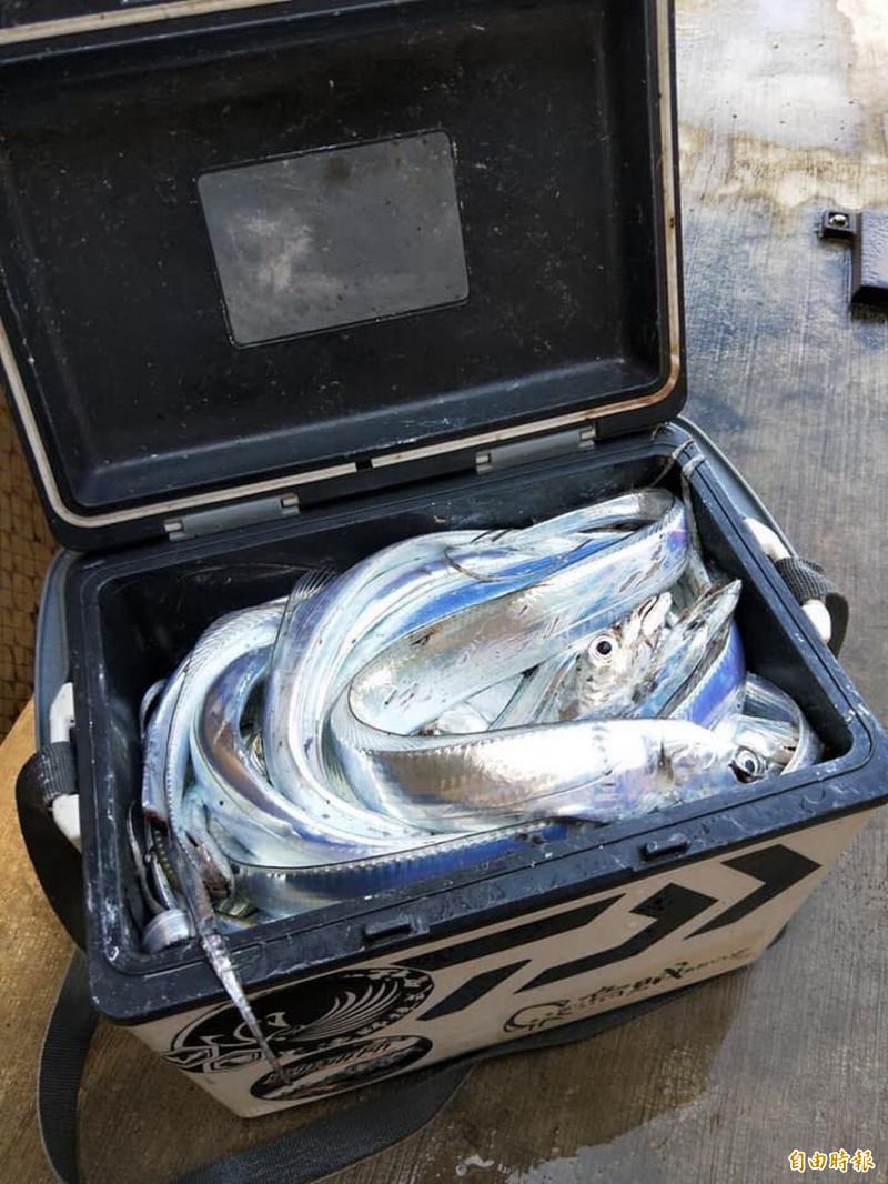釣友分享白帶魚爆桶的喜悅。(圖擷取自蔡其昌臉書)