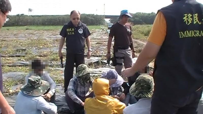 移民署屏東專勤在高屏兩地農田及果園逮獲18名打黑工的非法移工。(記者李立法翻攝)