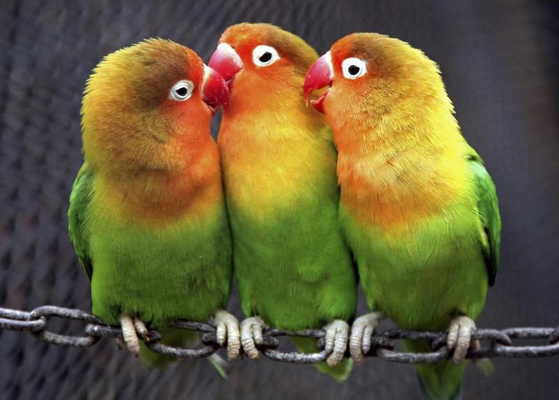 近日印度法院庭上出現審問「鸚鵡」的離奇場景。示意圖。(路透社)