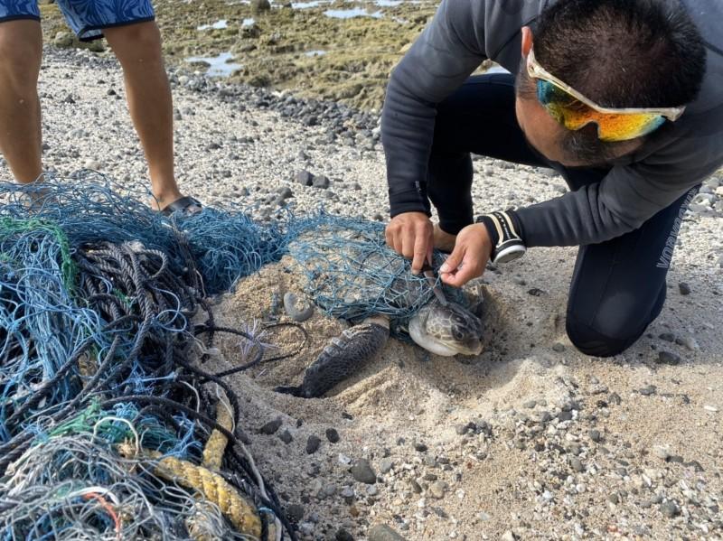 一級保育欖蠵龜遭漁網纏繞 海巡「越洋」搶救