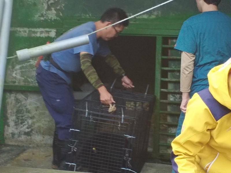 工作人員小心翼翼將小黑熊送上車,移往新照護地。(記者陳賢義翻攝)