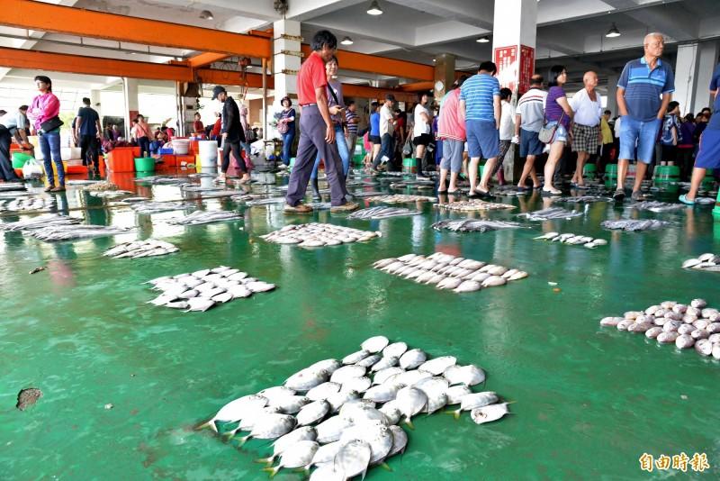 漁市場待拍賣的魚都擺在地上,韓國瑜來訪時,漁民深怕待價而估的心血在推擠中受損。(記者許麗娟攝)