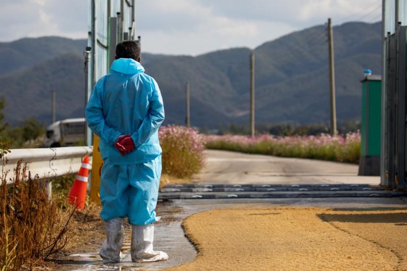 繼非洲豬瘟之後,韓國今(27日)傳出南部城市金泉驗出疑似禽流感病例。南韓防疫人員示意圖。(彭博)