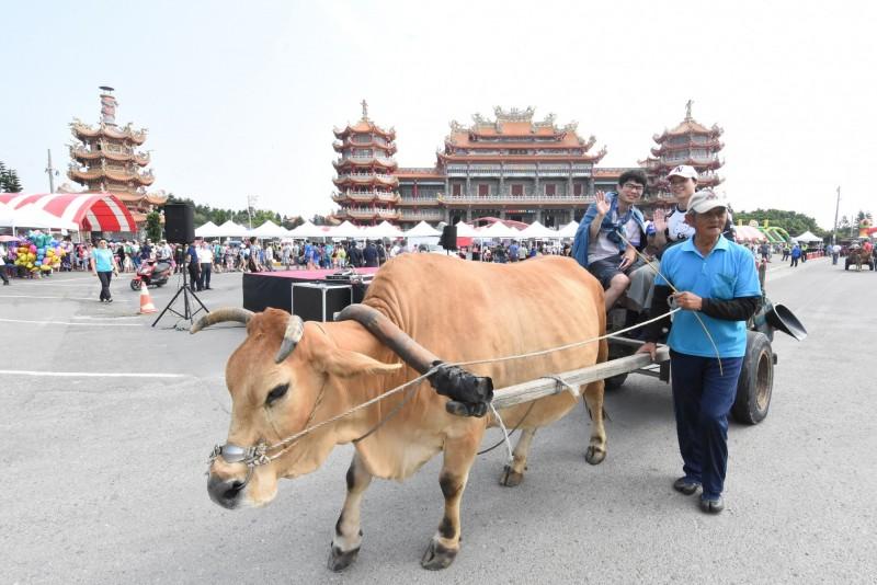 被列入台灣重要的無形文化資產,是亞洲唯一能乘坐海牛車出海採蚵,縣府列入來彰化必遊的觀光行程。(圖縣府提供)