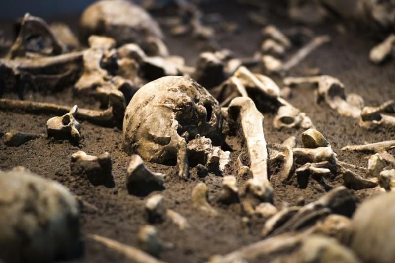 墨西哥警方日前突擊一處位於墨西哥城提皮多、疑似毒販窩藏所時,在其祭壇旁發現40多個頭骨、數十塊骨頭,以及玻璃罐中的一名胎兒。圖為骨頭示意圖。(美聯社)