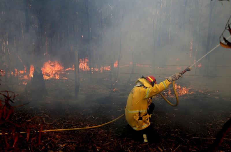 澳洲新南威斯野火,燒毀無尾熊棲地。(歐新社)