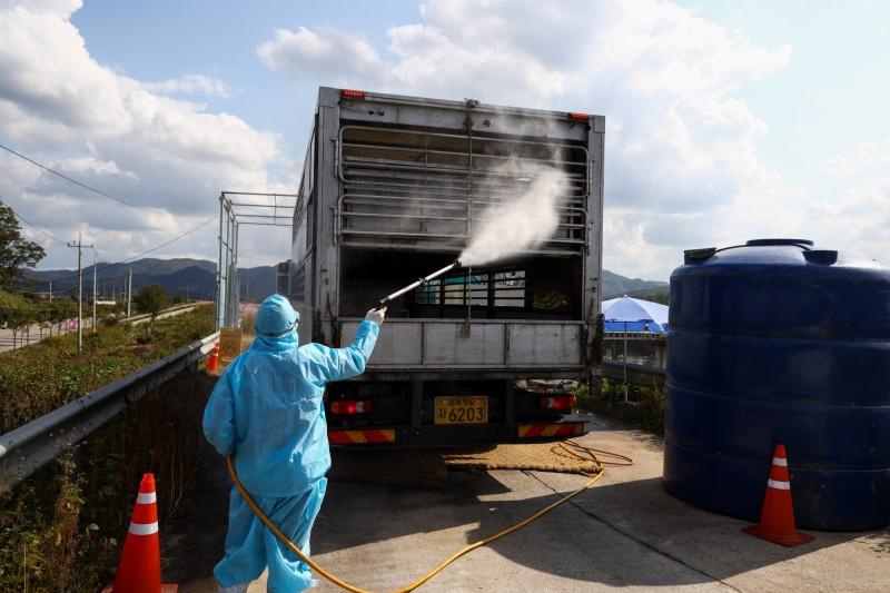韓國出現第20起野豬感染非洲豬瘟的病例。(彭博)