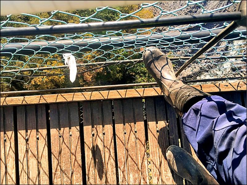 奧萬大吊橋昨發生年約2歲幼童墜橋意外,男童疑從側面鐵絲圍網底部與橋面間縫隙踩空墜落。(圖:民眾提供)
