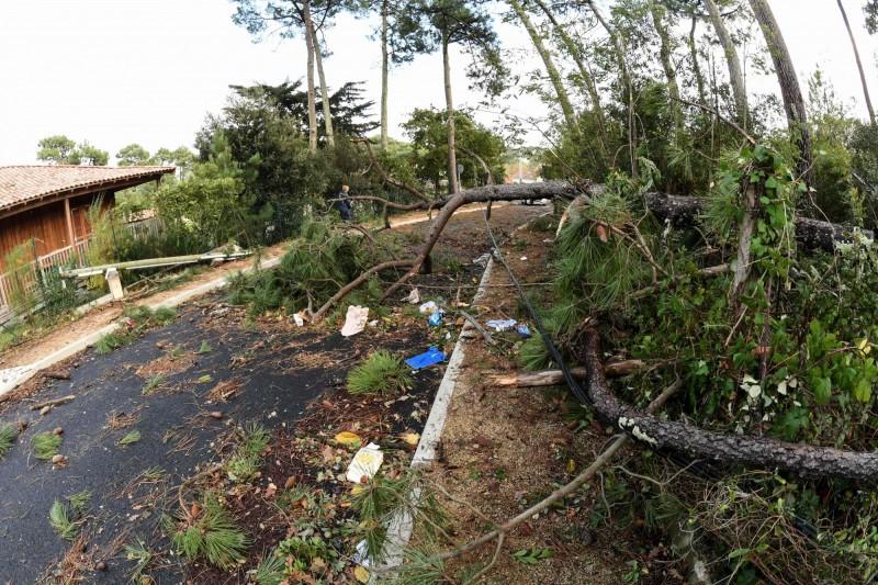 法國南部昨日遭暴風雨侵襲,造成多起樹木倒塌。(法新社)