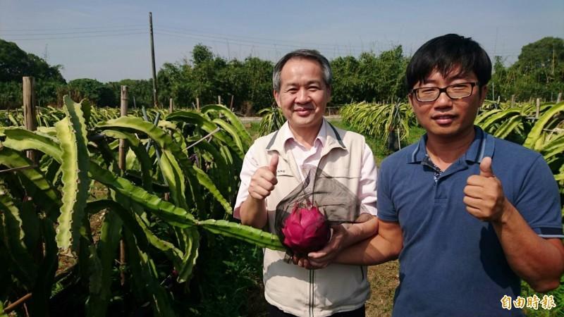 南市農業局副局長李建裕(左)稱讚張祿棠(右)的紅龍果有機栽種技術一流,一株只留一顆。(記者楊金城攝)