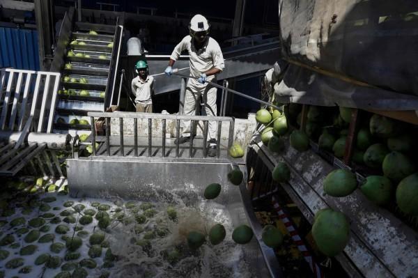 國民健康署認為,椰子油並不能治療阿茲海默症。(法新社檔案照)