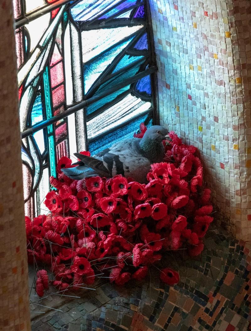 10月初起,擺在無名澳洲士兵之墓的罌粟花經常消失,後來得知原來是被鴿子叼去築巢。(路透)