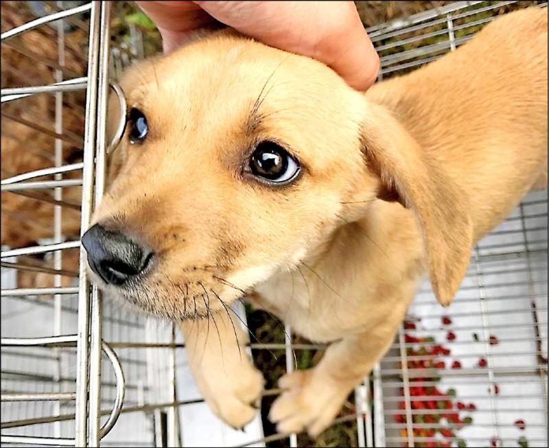 依動保法規定,經營特定寵物寄養,須申請許可,並依法領得營業證照,違法可罰10萬到300萬元。(苗栗縣動物保護防疫所提供)