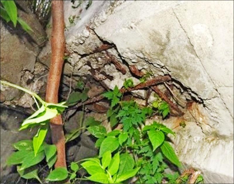 東石臥龍橋有鋼筋外露問題。(記者林宜樟翻攝)