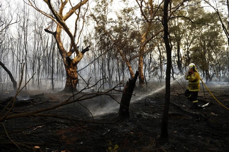 澳洲野火今(12)日已經擴散到雪梨北部郊區塔勒馬拉(Turramurra),離市中心只有約15公里,所幸火勢已獲得控制。(歐新社)