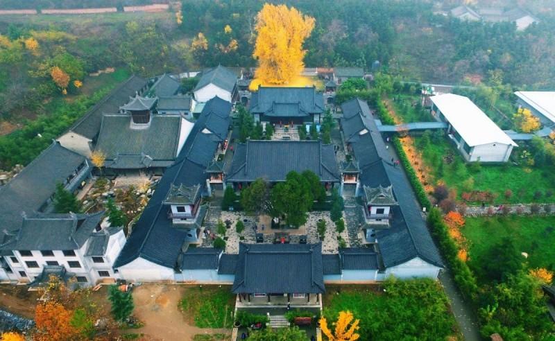 中國陝西省西安市的古觀音禪寺中,一株銀杏樹有著悠久的1400年歷史,因季節轉換變得金黃一片,搭配高聳入雲的景象,讓不少人直呼相當壯觀。(圖片擷取自「Aesthetic Sharer ZhrArt」)