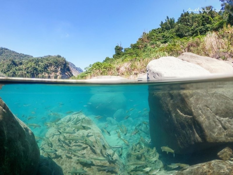 達娜伊谷鯝魚水中游清晰可見。(劉博文攝影提供)