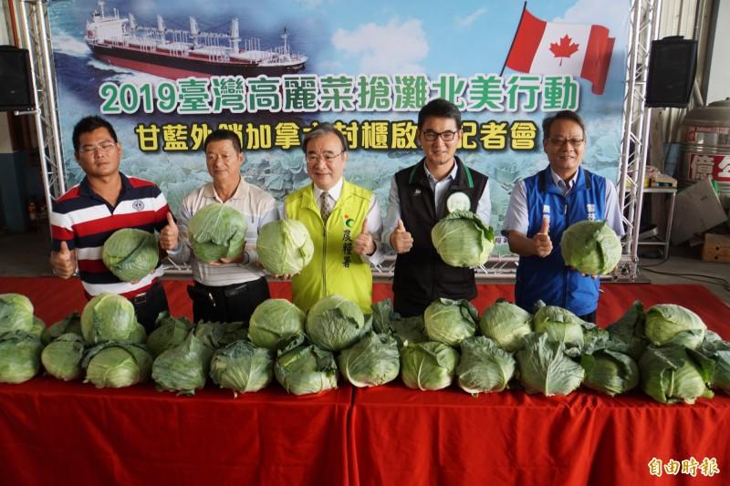台灣高麗菜外銷加拿大,裝櫃啟航。(記者詹士弘攝)