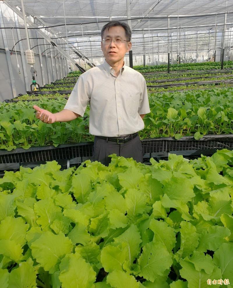 智耕創新科技公司執行長黃明發的低鉀蔬菜種在溫室中。(記者張菁雅攝)