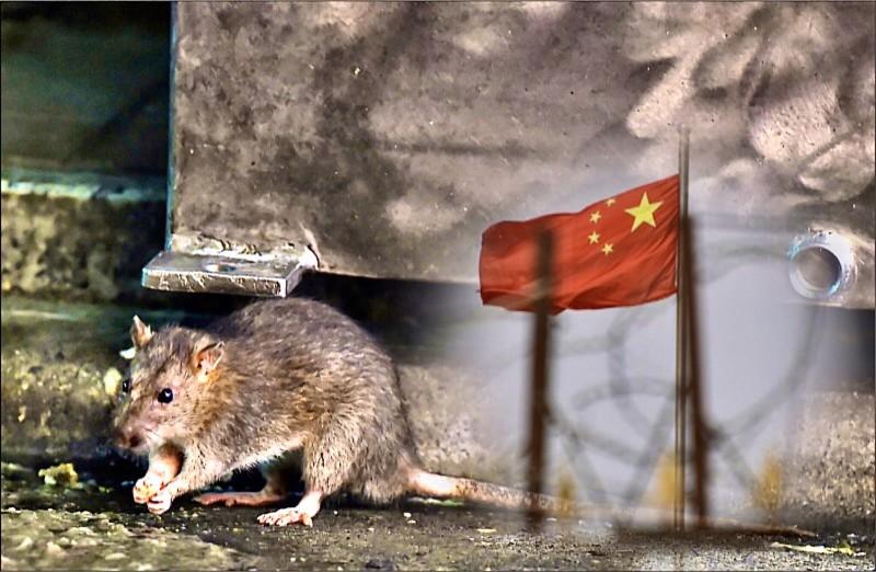 台灣醫師認為,出現鼠疫病例並不可怕,可怕的是中國封鎖消息。(法新社檔案照,本報合成)
