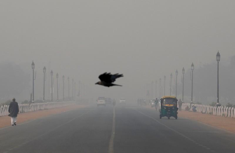 印度爆發鳥類大規模死亡事件。(路透)