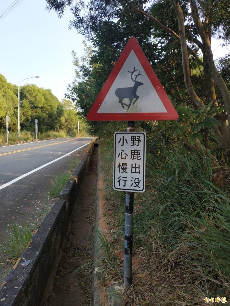龍井南崗產業道路過去因曾有野鹿跑到馬路上,造成騎士為躲避而愛傷,因此區公所設野鹿出没,小心慢行標誌。(記者蘇金鳳攝)