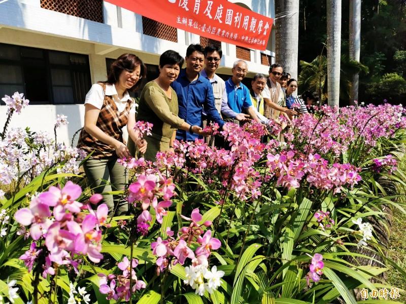 台南農改場在新化林場試種新育成的苞舌蘭,美麗綻放。(記者吳俊鋒攝)