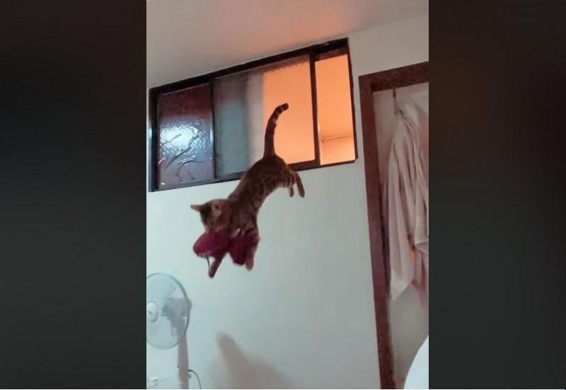 一名正妹在臉書社團PO出紅色內衣被偷的慘烈狀況,而兇手竟然就是自家養的貓!影片曝光讓不少網友笑翻,更有網友歪樓搞錯重點,紛紛留言驚呼「有夠大!」(圖片擷取自「爆廢公社」)