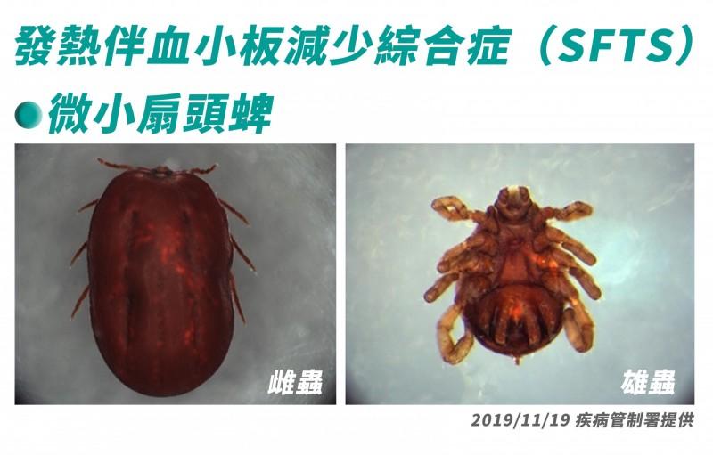 微小扇頭蜱。(圖由疾管署提供)