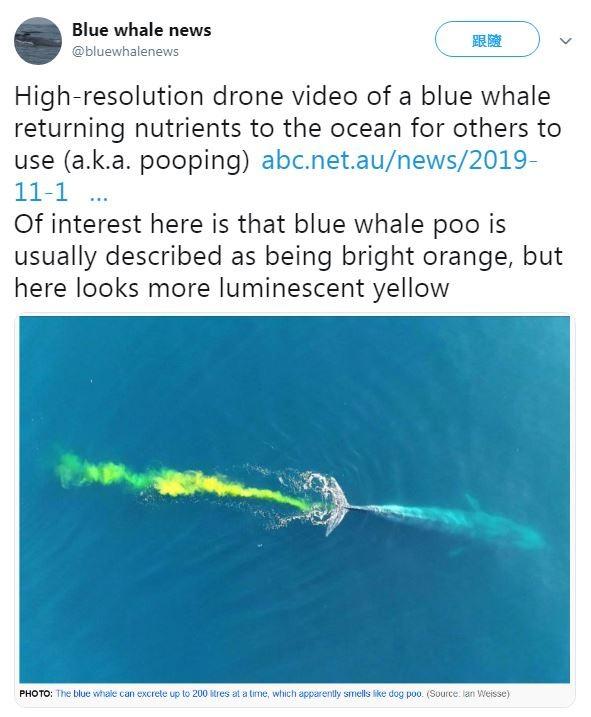 一位景觀攝影師魏斯近日在澳洲伯斯的南方,用無人機捕捉到「藍鯨排便」的畫面,多達200公升的「亮黃色排泄物」在海上蔓延,景象相當壯觀。(圖擷取自Twitter「Blue whale news」)