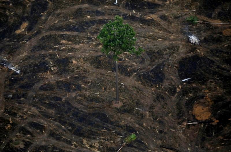 巴西18日公布的官方數據顯示,該國亞馬遜雨林遭人類砍伐的森林面積上升至10年來最高。(路透)