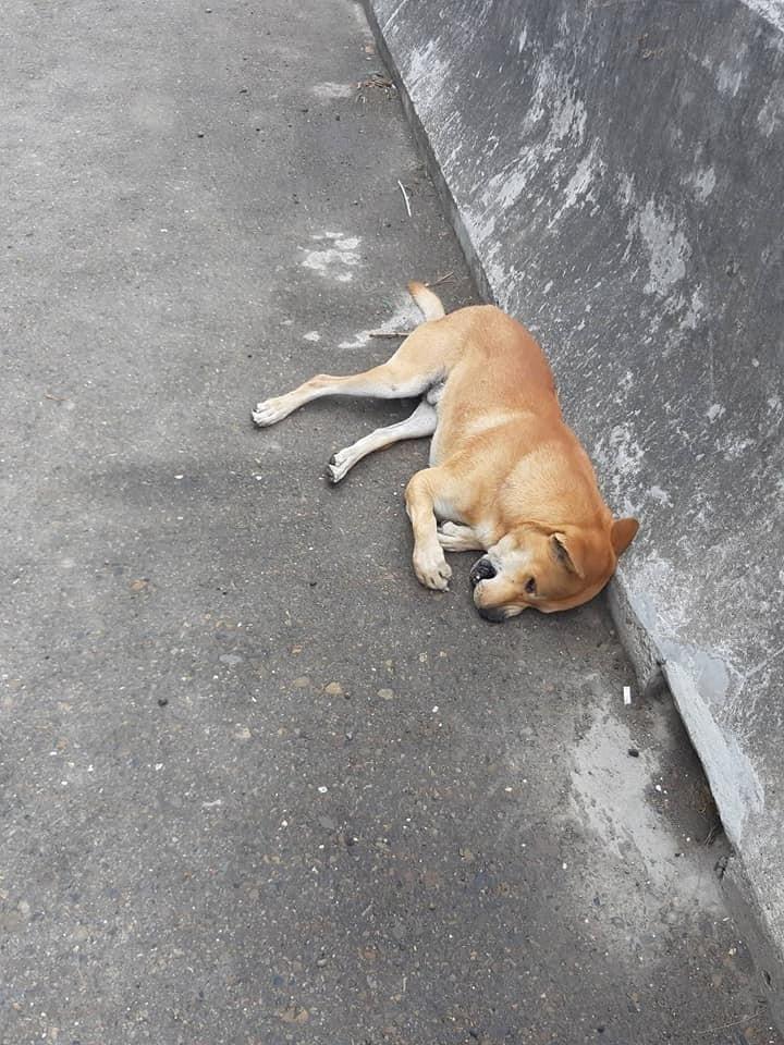 黃色土狗遭撞噴飛10餘公尺橋下,竟又撞轎車頂當場死亡。(翻攝臉書我愛鹿港小鎮)