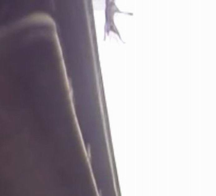 狗狗墜落15公尺橋下當場死亡瞬間直擊。(民眾提供)
