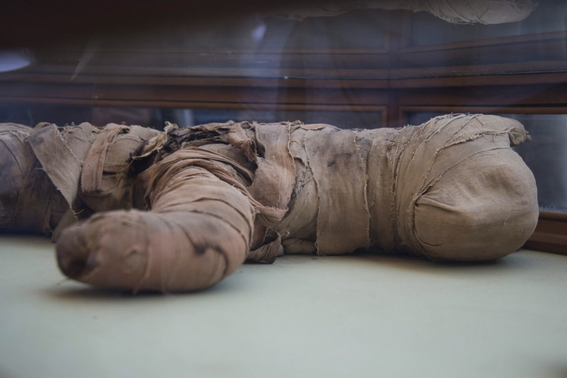 疑似是獅子幼崽的木乃伊相當罕見。(歐新社)