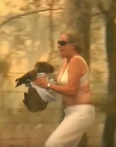 澳洲當地一名婦人朵亨緹(Toni Doherty)衝入火場,成功救援出一隻在野火中嚴重燒傷的無尾熊路易斯(Lewis)。然而,無尾熊路易斯最終因傷重不治,經專業人士評估後進行安樂死。(擷取自YouTube)