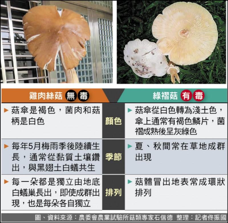 雞肉絲菇VS.綠褶菇