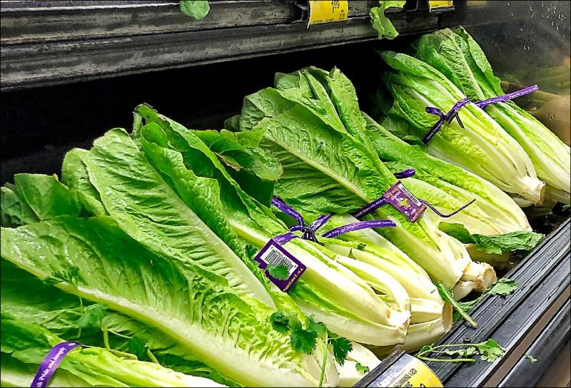 美國疾病管制與預防中心警告,加州的蘿蔓生菜遭大腸桿菌污染,已傳出多人食用後中毒。 (美聯社)