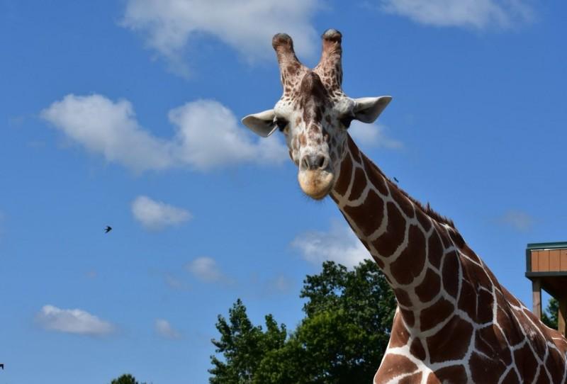 美國俄州(Ohio)「非洲野生動物園」(African Safari Wildlife Park)昨(28)日傍晚驚傳火災,火勢從園區一棟建築蔓延,造成10隻動物葬身火海,還有斑馬和長頸鹿四處逃竄。(圖擷取自African Safari Wildlife Park臉書)